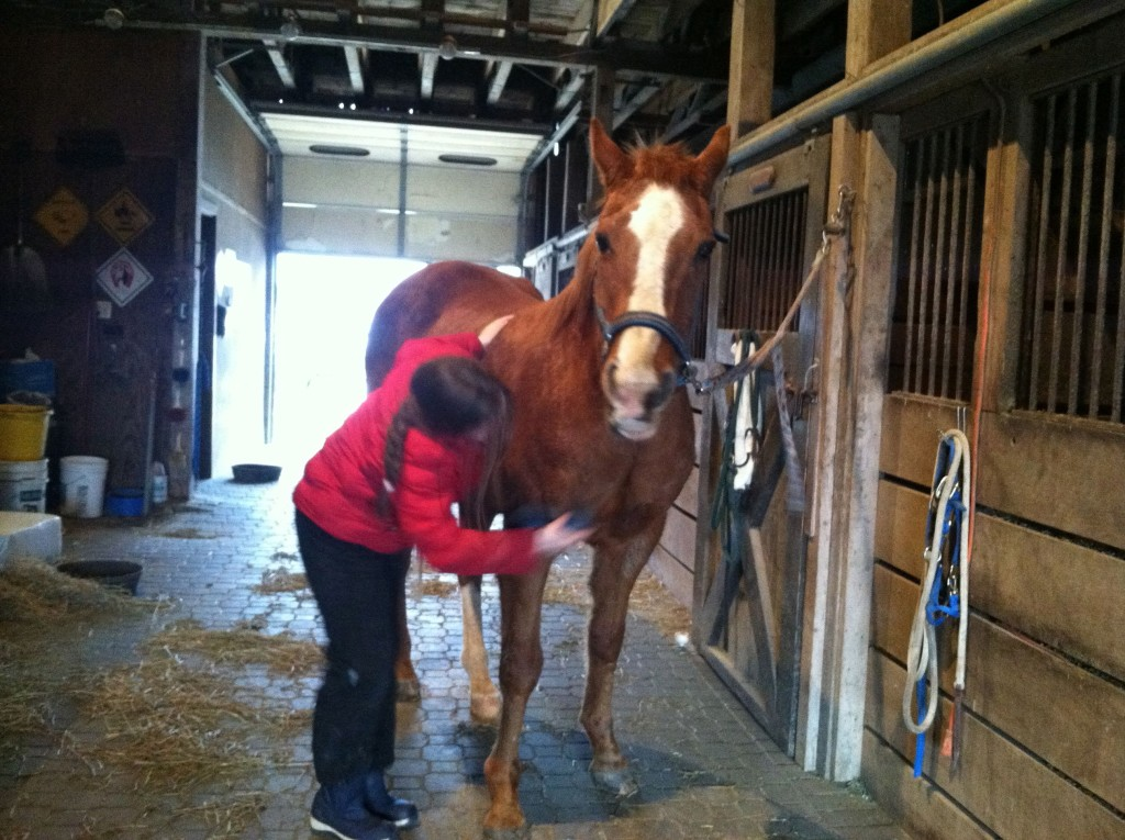 Blaze horse being groomed