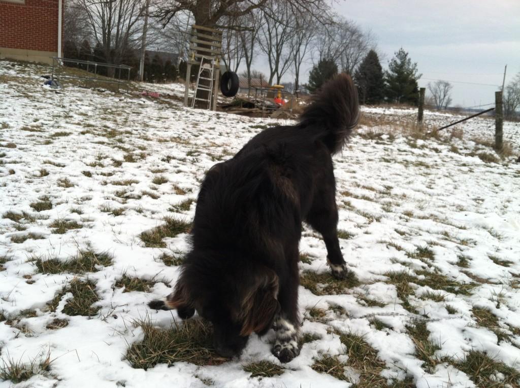 Goofball Dog Padfoot