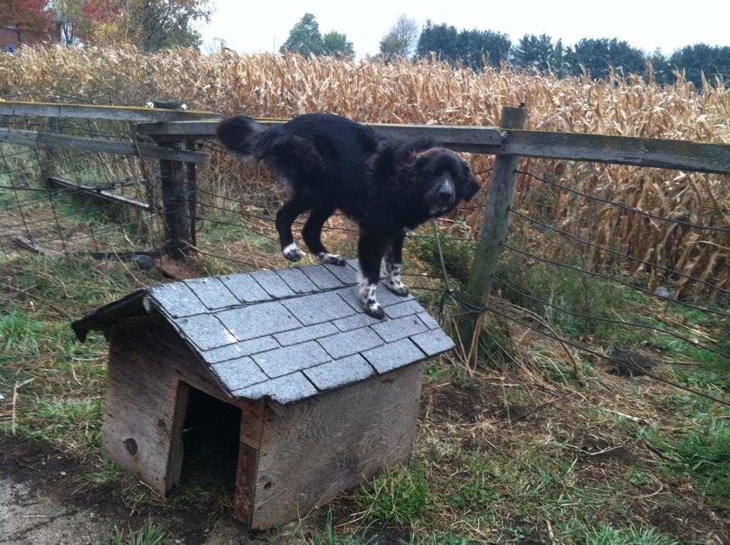 Padfoot's Doghouse and Him