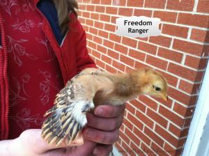 Freedom Ranger FFR