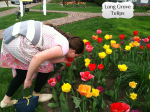 Long Grove Stopping to Smell Tulips