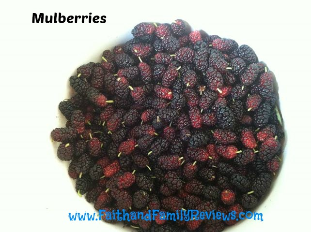 FFR Mulberries_edit