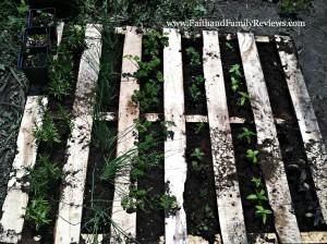 FFR Pallet Herb Garden