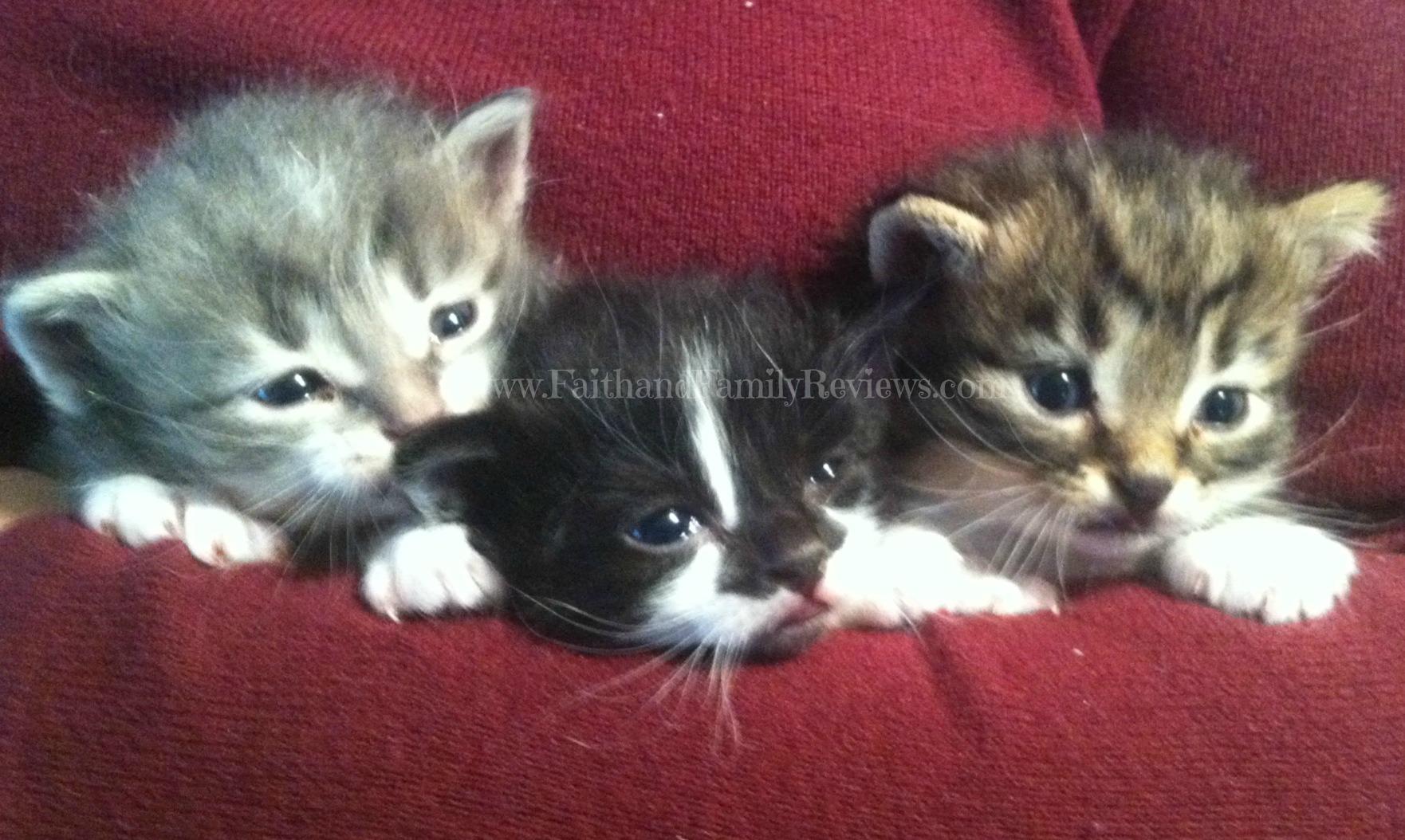 Kittens 4 weeks old_