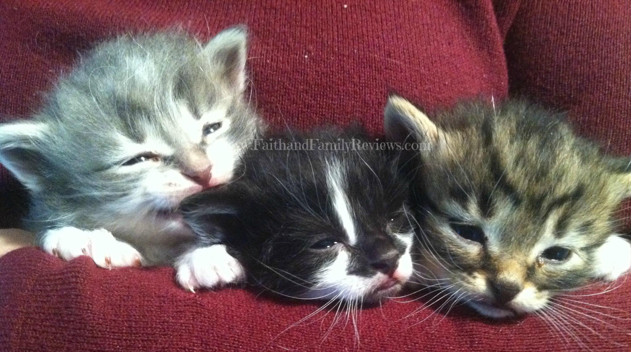 Kittens 4 weeks old_2_