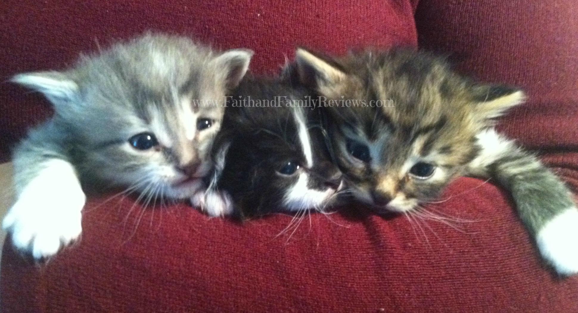 Kittens 4 weeks old_3_