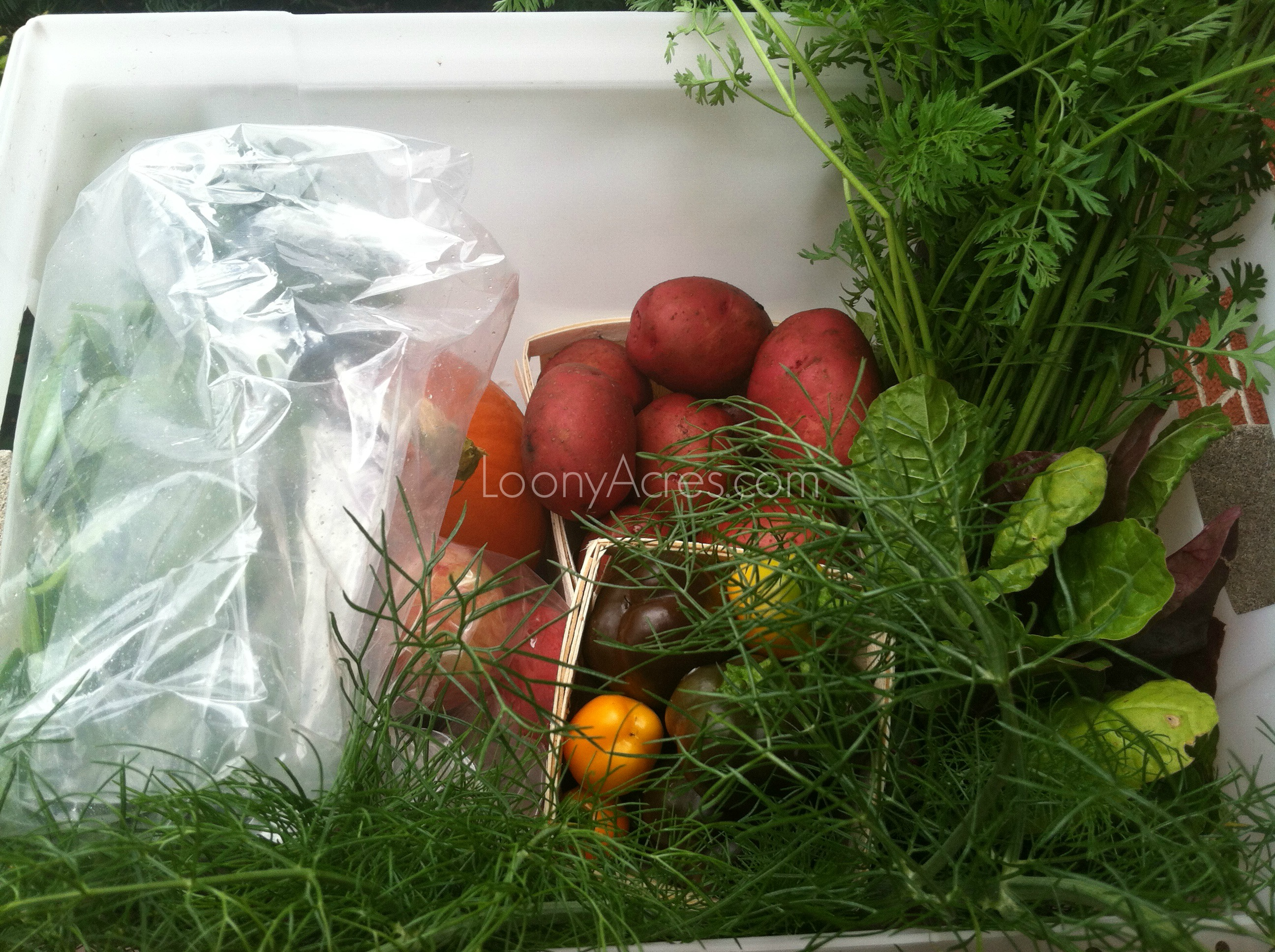 LoonyAcres CSA half share week #20_