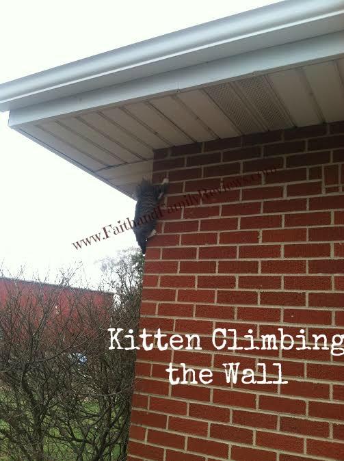 FFR Kitten Climbing Wall_