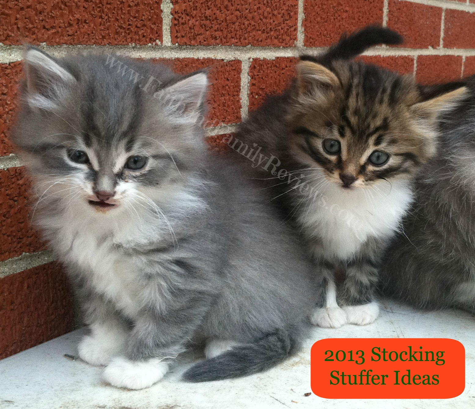 FFR Kitten Stocking Stuffer Ideas
