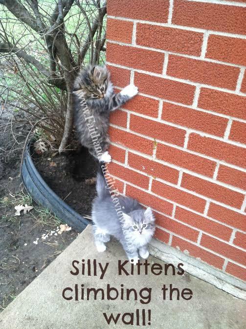 FFR Kittens climbing wall_