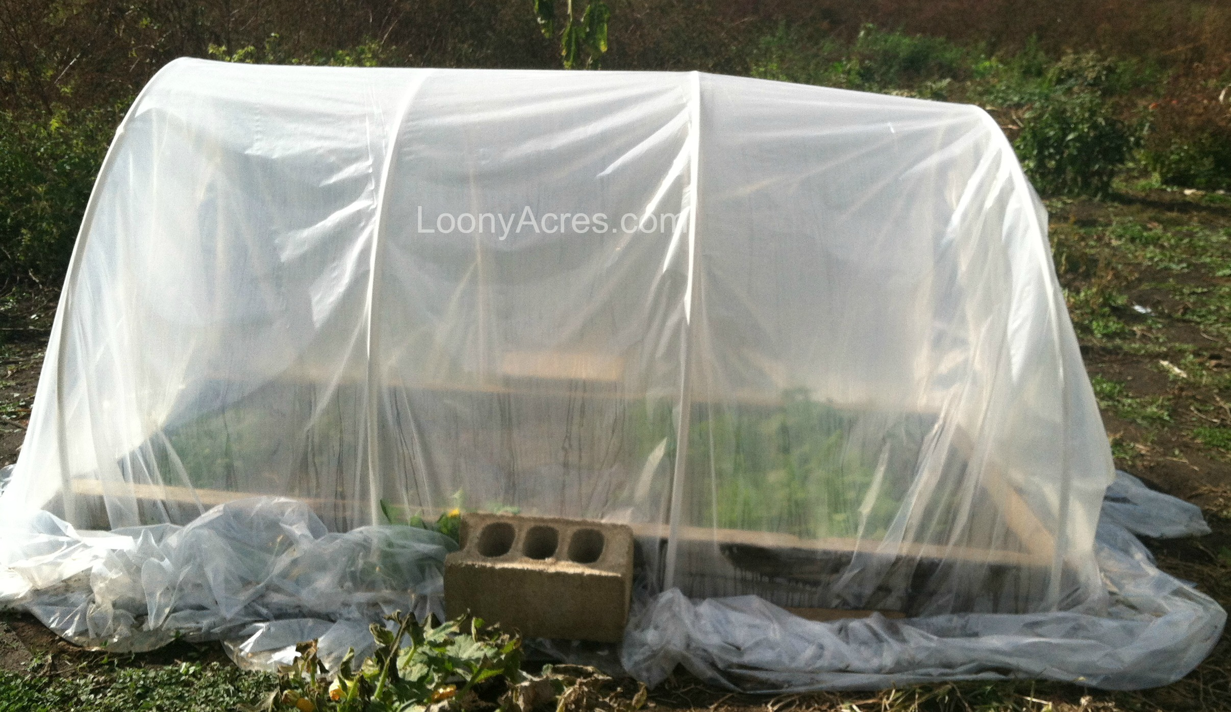 LoonyAcres Mini Greenhouse 2