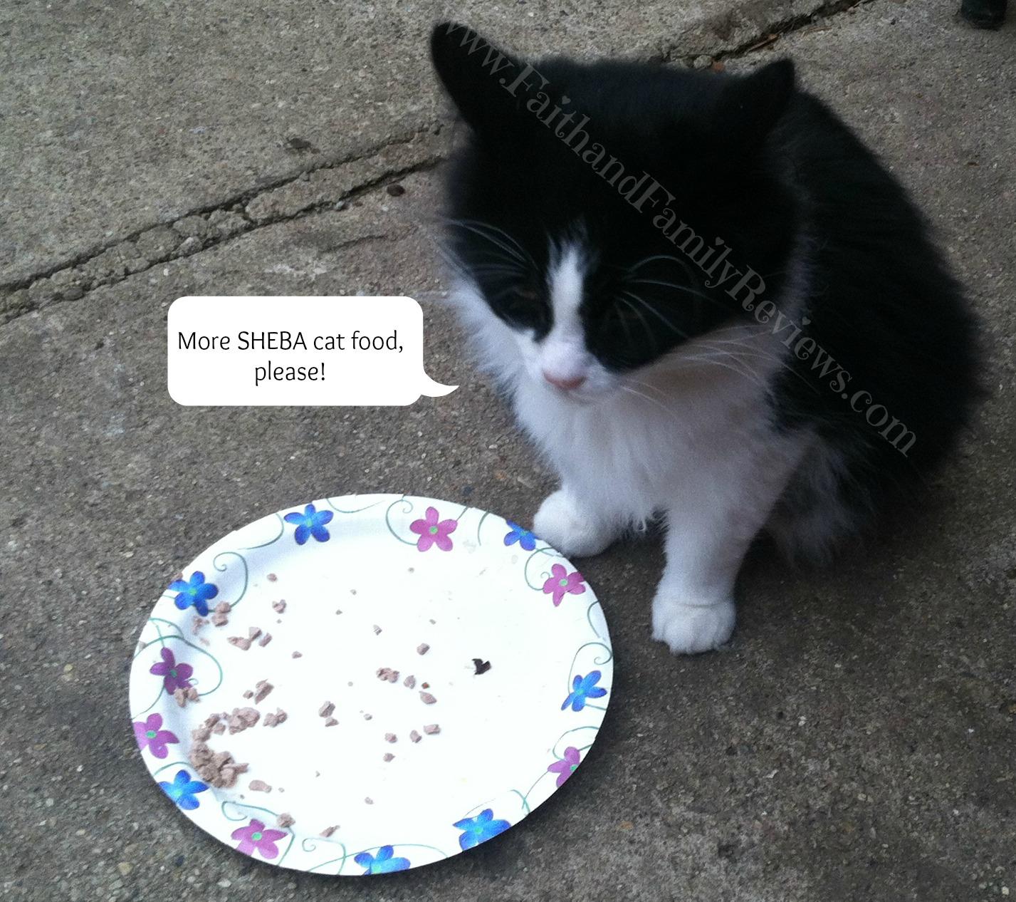 Sev waiting for more SHEBA Cat Food #shop_