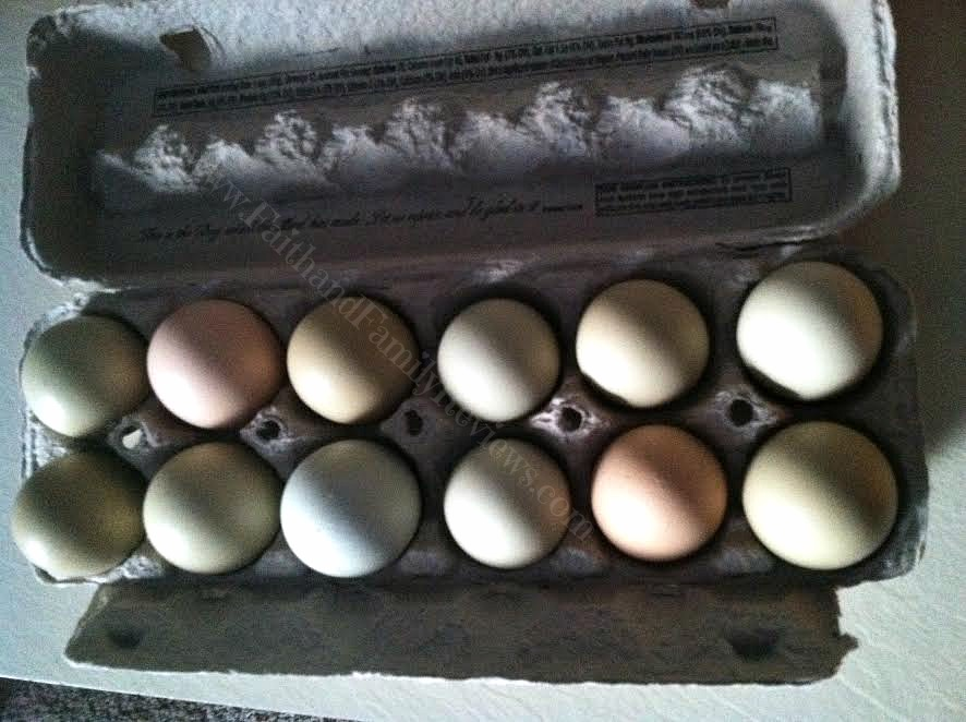 FFR Funny colored eggs