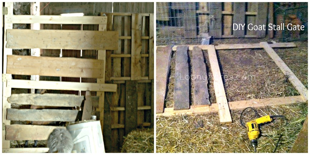 DIY Goat Stall Gate with Wood Pallets