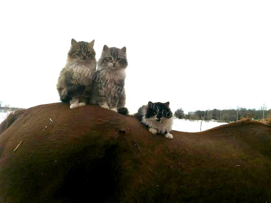 FFR Cats on Blaze 031114