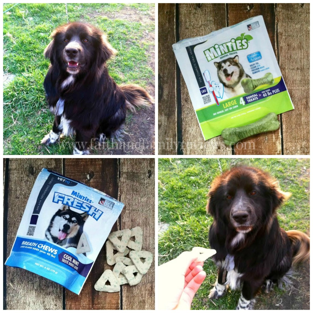 FFR Minties and Padfoot Collage