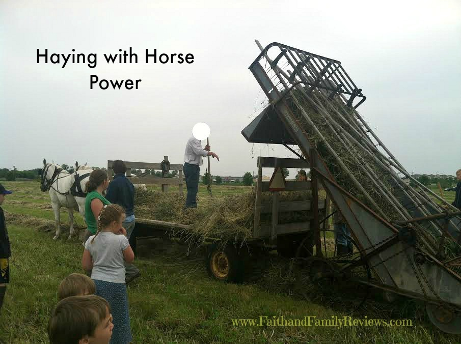 FFR Haying with Horses