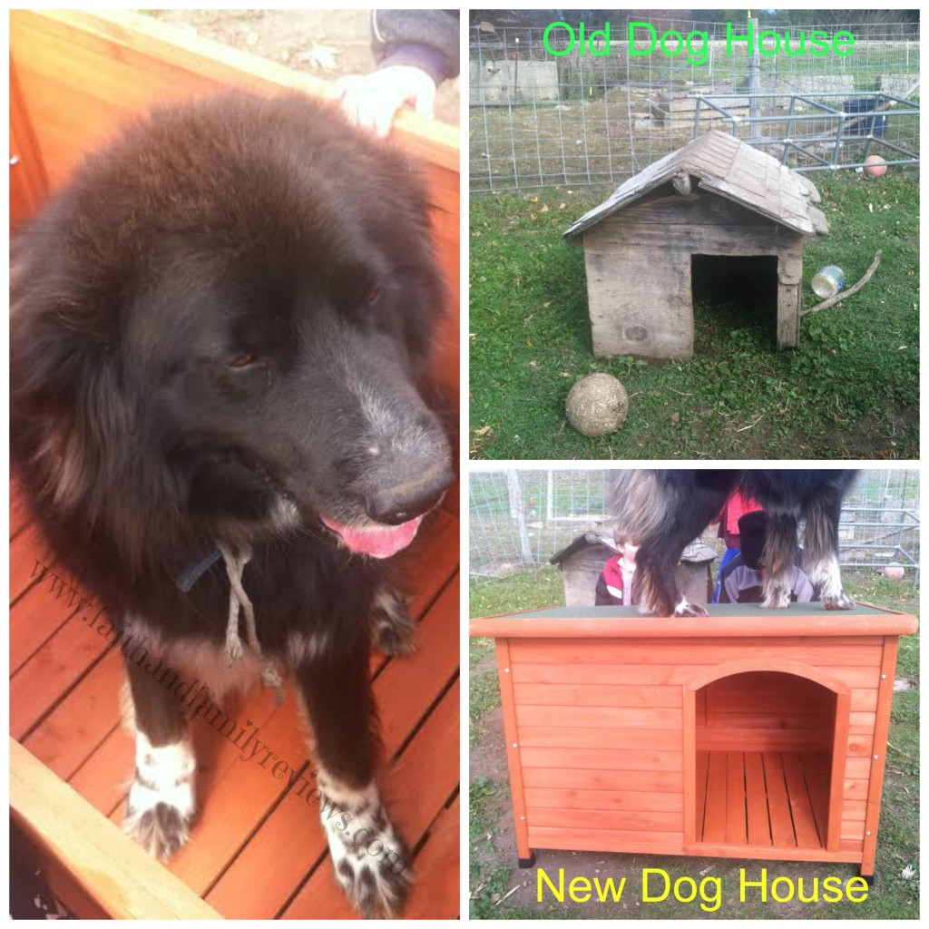 Padfoot Dog House Collage