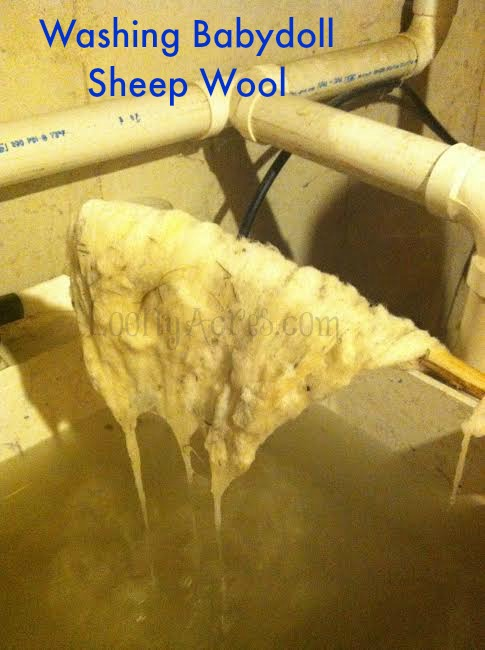 Washing Wool_1_