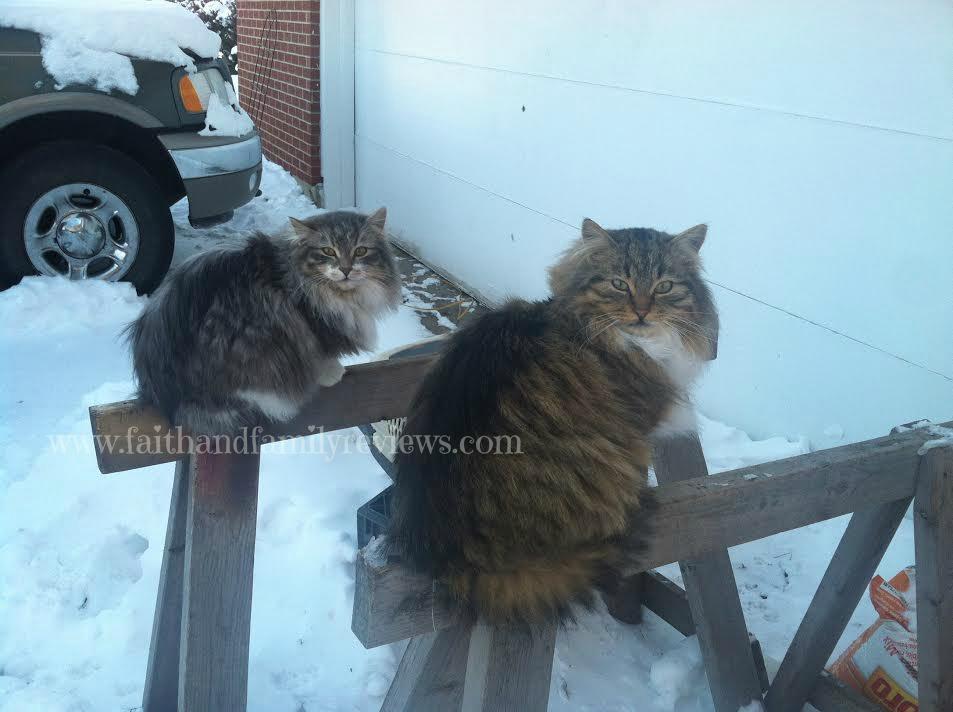 FFR Boy cats 020614