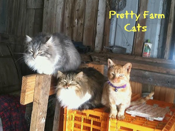 FFR Pretty Farm Cats